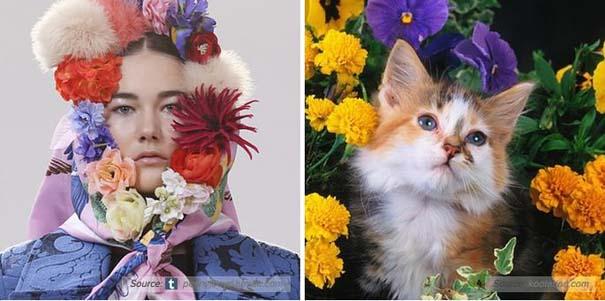 Γάτες αναπαριστούν πιερίεργες πόζες μοντέλων (5)
