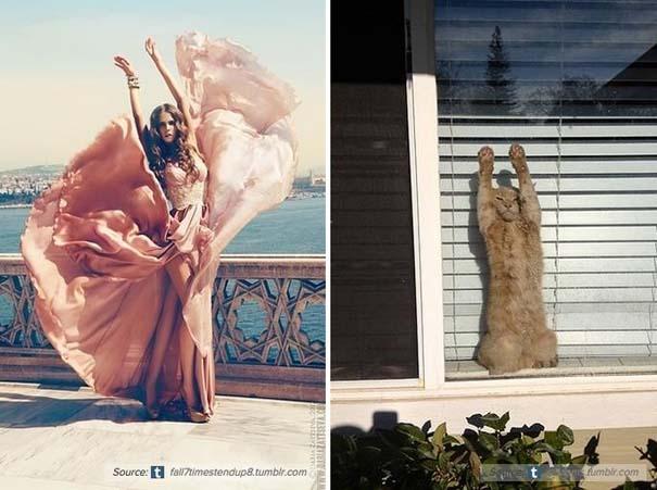 Γάτες αναπαριστούν πιερίεργες πόζες μοντέλων (7)