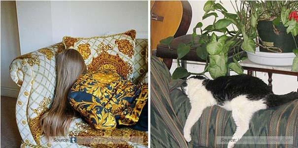Γάτες αναπαριστούν πιερίεργες πόζες μοντέλων (8)