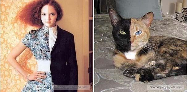 Γάτες αναπαριστούν πιερίεργες πόζες μοντέλων (10)