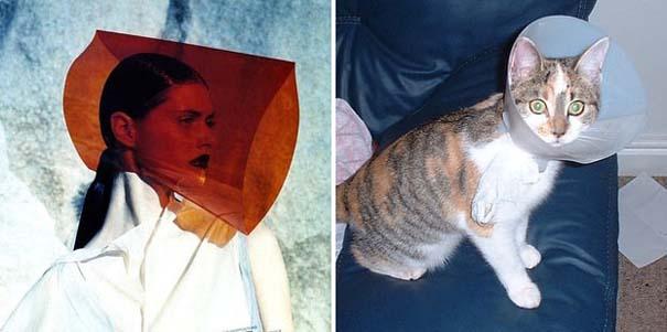 Γάτες αναπαριστούν πιερίεργες πόζες μοντέλων (18)