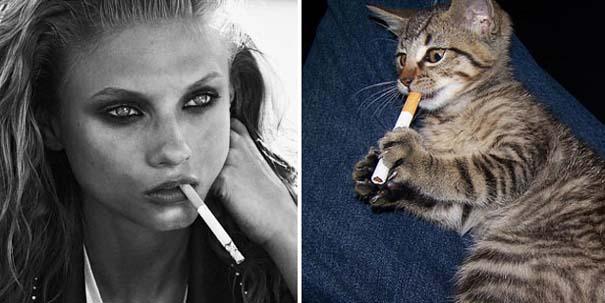 Γάτες αναπαριστούν πιερίεργες πόζες μοντέλων (19)