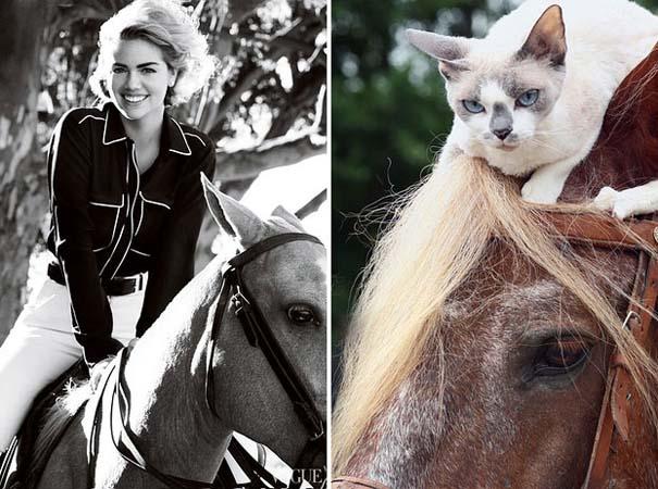 Γάτες αναπαριστούν πιερίεργες πόζες μοντέλων (20)