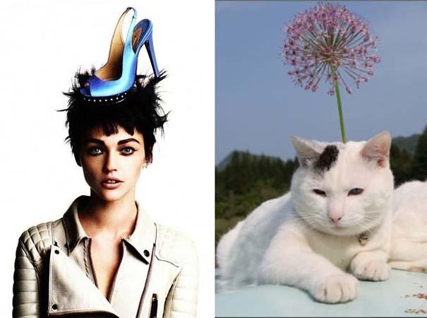 Γάτες αναπαριστούν πιερίεργες πόζες μοντέλων (13)