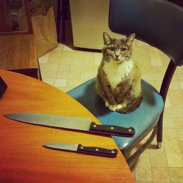 Γάτες που σχεδιάζουν την δολοφονία σου (1)