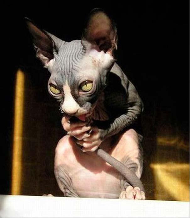 Γάτες που σχεδιάζουν την δολοφονία σου (2)