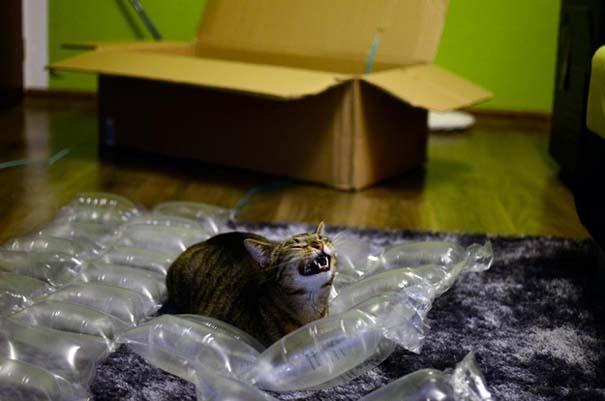 Γάτες που σχεδιάζουν την δολοφονία σου (3)