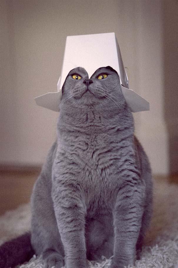 Γάτες που σχεδιάζουν την δολοφονία σου (4)