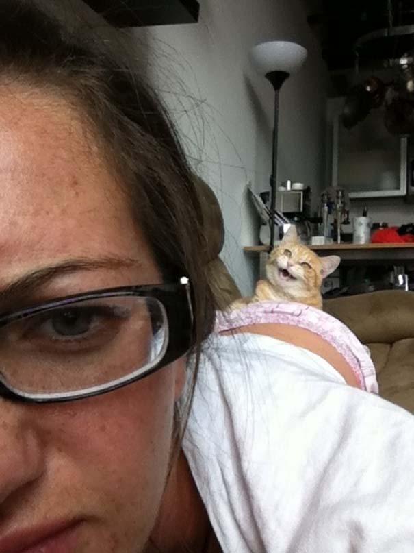 Γάτες που σχεδιάζουν την δολοφονία σου (9)
