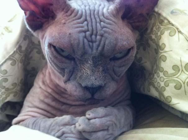 Γάτες που σχεδιάζουν την δολοφονία σου (10)