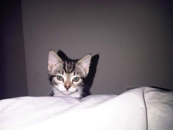 Γάτες που σχεδιάζουν την δολοφονία σου (11)