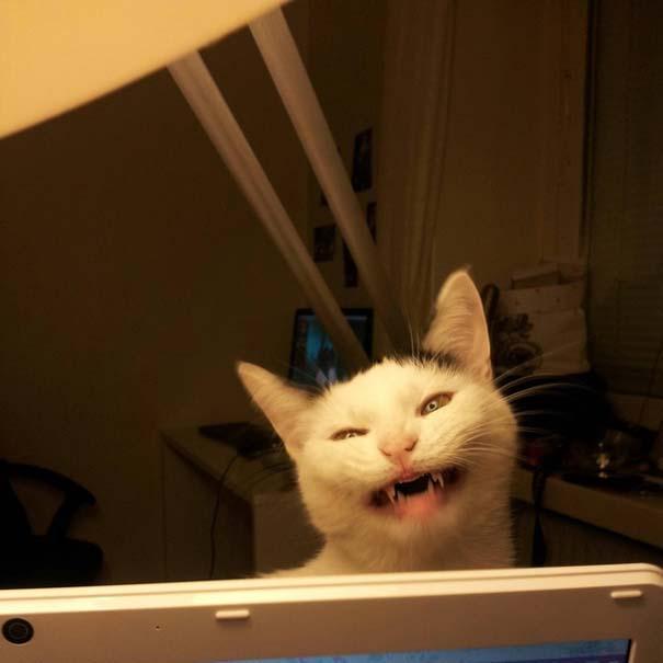 Γάτες που σχεδιάζουν την δολοφονία σου (14)