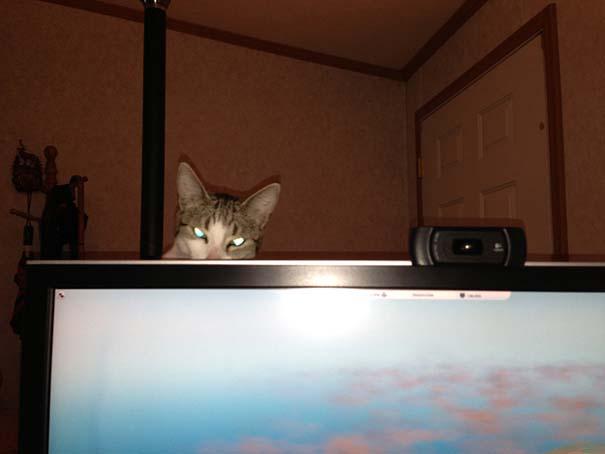 Γάτες που σχεδιάζουν την δολοφονία σου (15)