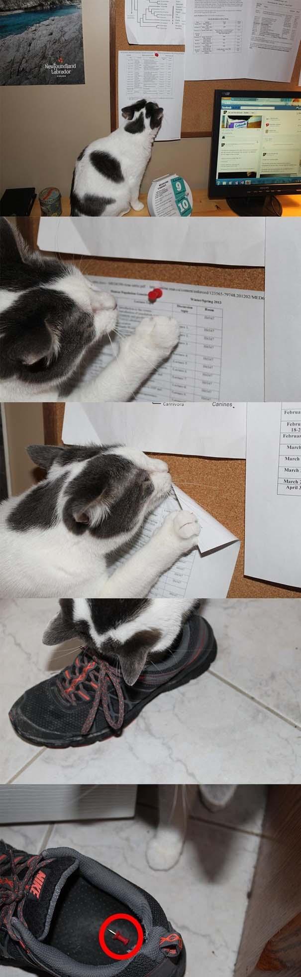 Γάτες που σχεδιάζουν την δολοφονία σου (16)