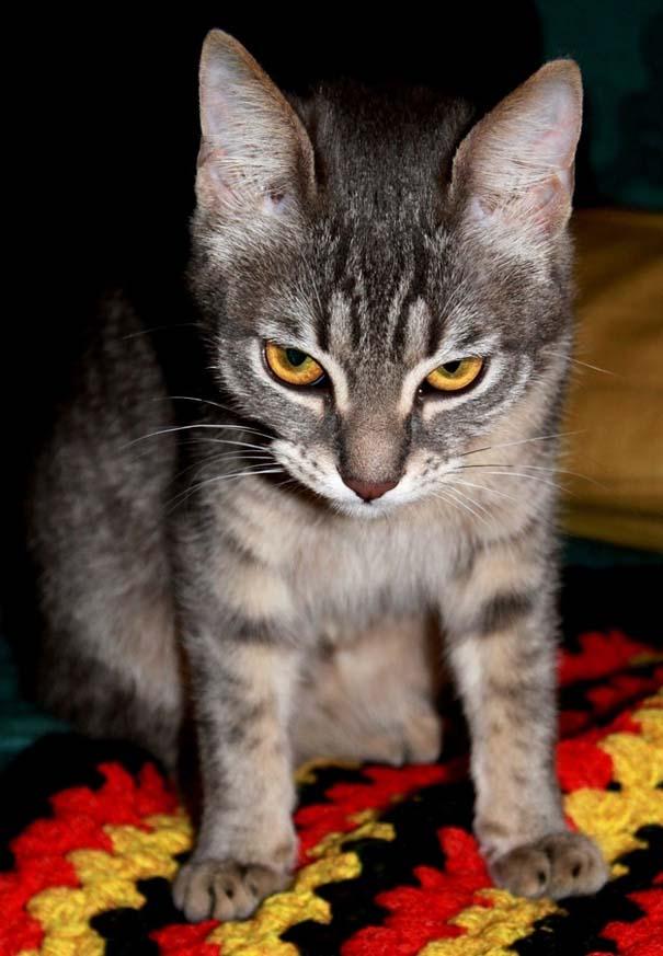 Γάτες που σχεδιάζουν την δολοφονία σου (17)