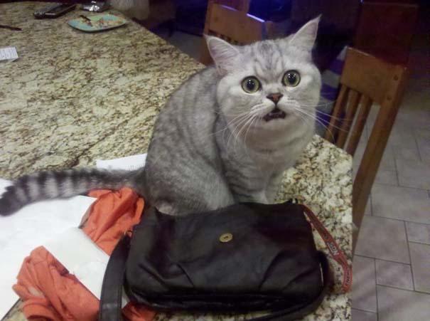 Γάτες που σχεδιάζουν την δολοφονία σου (18)