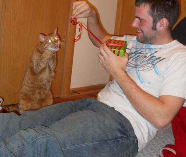 Γάτες που σχεδιάζουν την δολοφονία σου (19)