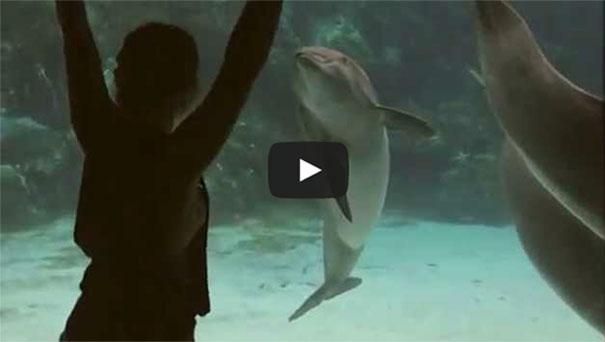 Κορίτσι ψυχαγωγεί τα δελφίνια με... γυμναστικές επιδείξεις