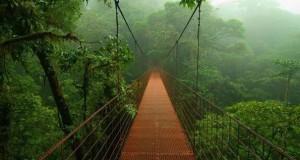Μαγευτική φωτογραφική περιήγηση στα δάση του Αμαζονίου