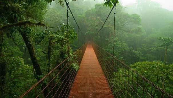 Μαγευτική φωτογραφική περιήγηση στα δάση του Αμαζονίου (1)