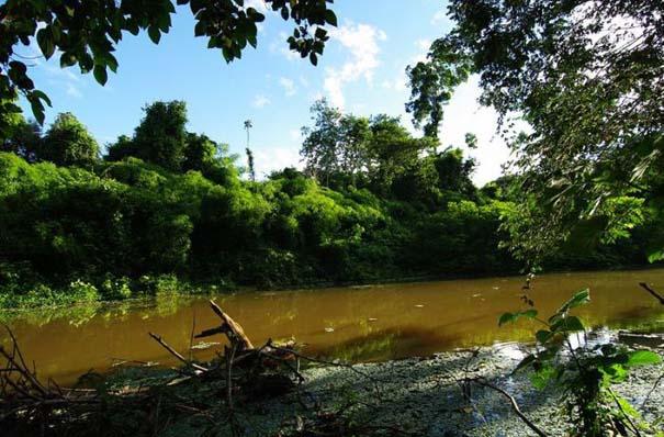 Μαγευτική φωτογραφική περιήγηση στα δάση του Αμαζονίου (2)