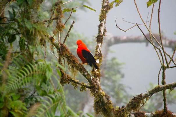 Μαγευτική φωτογραφική περιήγηση στα δάση του Αμαζονίου (3)
