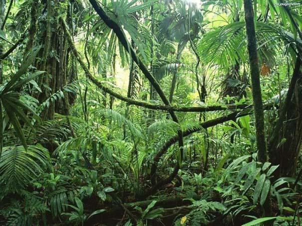 Μαγευτική φωτογραφική περιήγηση στα δάση του Αμαζονίου (5)