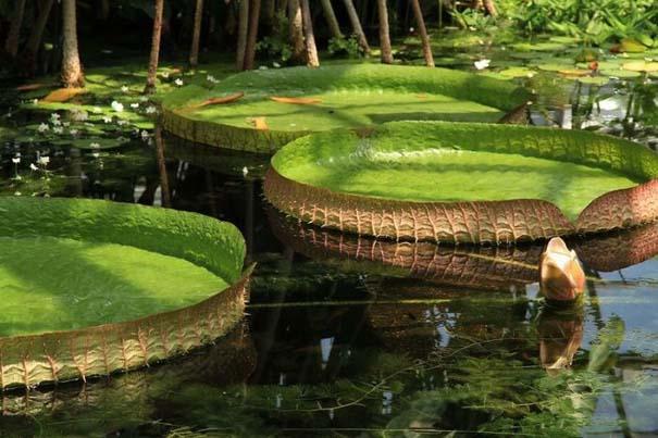 Μαγευτική φωτογραφική περιήγηση στα δάση του Αμαζονίου (6)