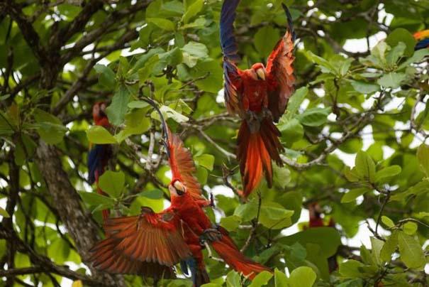 Μαγευτική φωτογραφική περιήγηση στα δάση του Αμαζονίου (7)