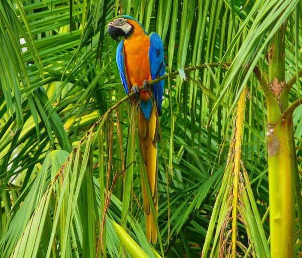 Μαγευτική φωτογραφική περιήγηση στα δάση του Αμαζονίου (8)