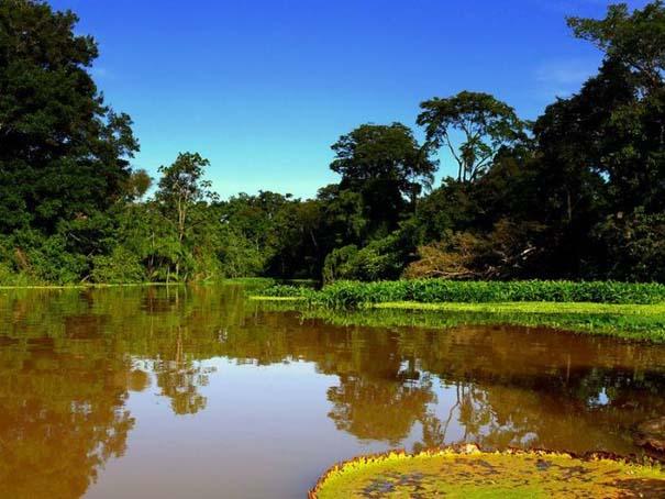 Μαγευτική φωτογραφική περιήγηση στα δάση του Αμαζονίου (9)