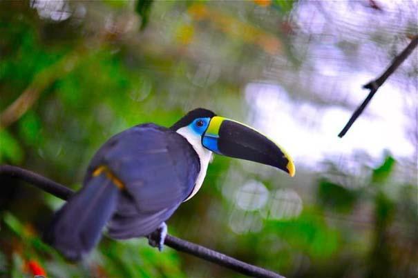 Μαγευτική φωτογραφική περιήγηση στα δάση του Αμαζονίου (10)