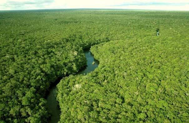 Μαγευτική φωτογραφική περιήγηση στα δάση του Αμαζονίου (12)