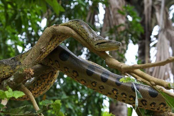 Μαγευτική φωτογραφική περιήγηση στα δάση του Αμαζονίου (14)