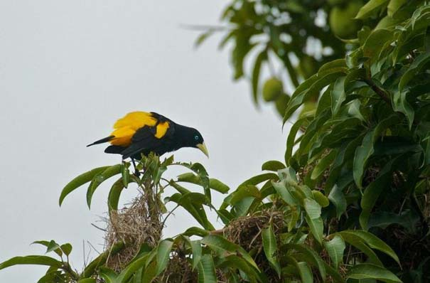 Μαγευτική φωτογραφική περιήγηση στα δάση του Αμαζονίου (17)