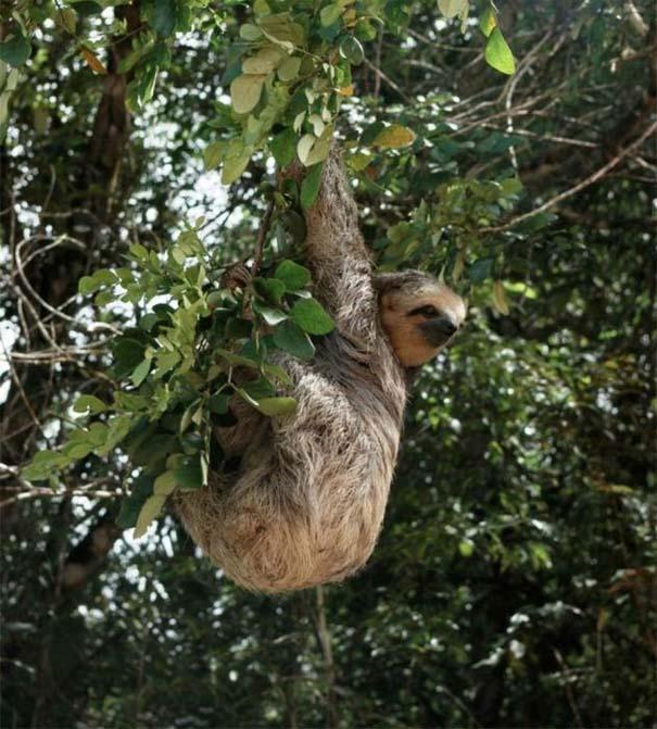 Μαγευτική φωτογραφική περιήγηση στα δάση του Αμαζονίου (18)