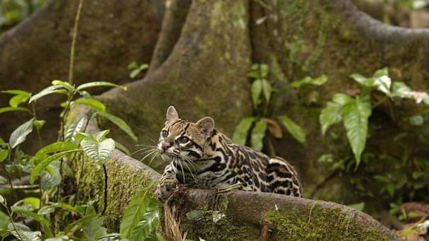 Μαγευτική φωτογραφική περιήγηση στα δάση του Αμαζονίου (19)