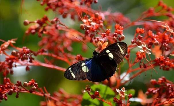Μαγευτική φωτογραφική περιήγηση στα δάση του Αμαζονίου (20)