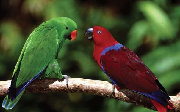 Μαγευτική φωτογραφική περιήγηση στα δάση του Αμαζονίου (21)