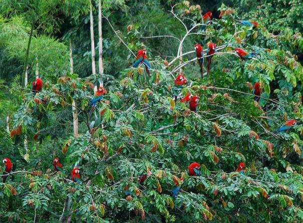 Μαγευτική φωτογραφική περιήγηση στα δάση του Αμαζονίου (24)