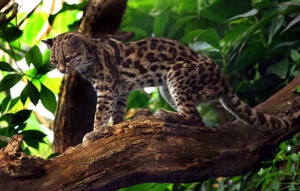 Μαγευτική φωτογραφική περιήγηση στα δάση του Αμαζονίου (26)
