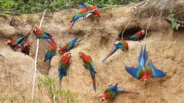 Μαγευτική φωτογραφική περιήγηση στα δάση του Αμαζονίου (27)
