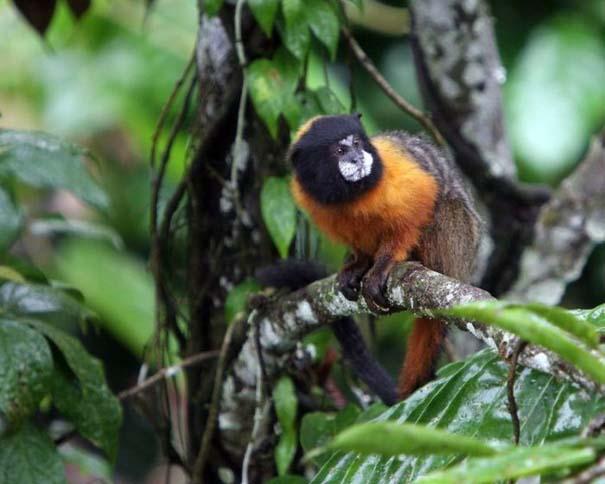Μαγευτική φωτογραφική περιήγηση στα δάση του Αμαζονίου (28)
