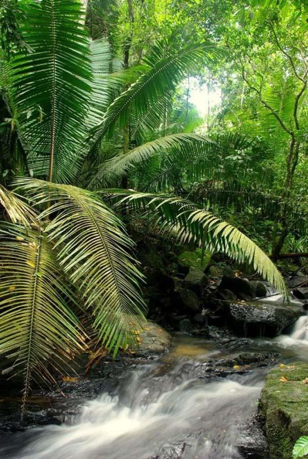 Μαγευτική φωτογραφική περιήγηση στα δάση του Αμαζονίου (29)