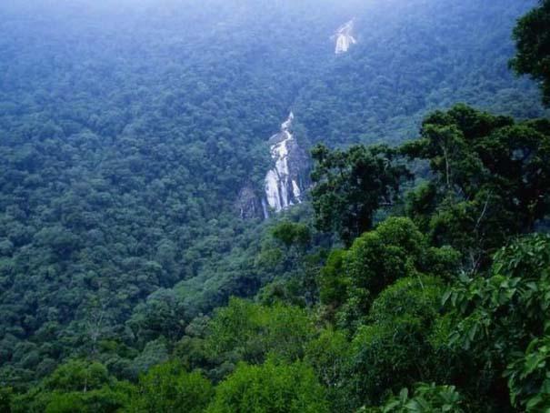 Μαγευτική φωτογραφική περιήγηση στα δάση του Αμαζονίου (32)