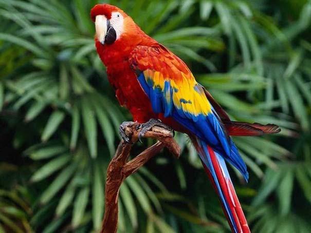 Μαγευτική φωτογραφική περιήγηση στα δάση του Αμαζονίου (33)