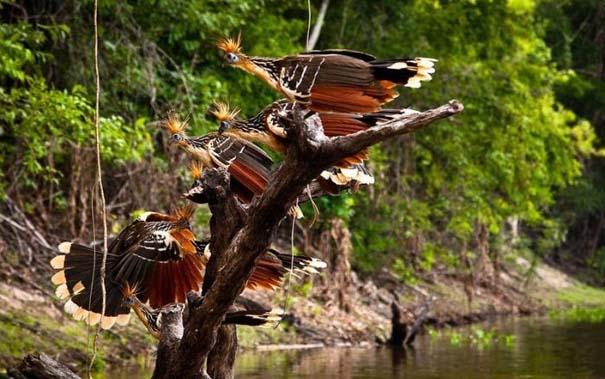 Μαγευτική φωτογραφική περιήγηση στα δάση του Αμαζονίου (34)