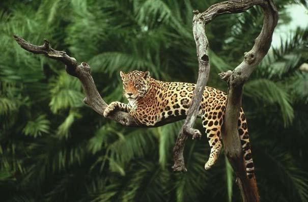 Μαγευτική φωτογραφική περιήγηση στα δάση του Αμαζονίου (35)