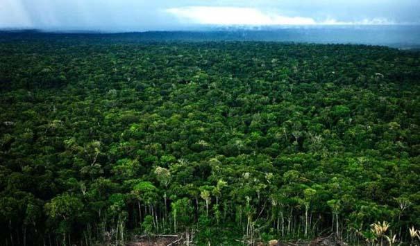 Μαγευτική φωτογραφική περιήγηση στα δάση του Αμαζονίου (36)