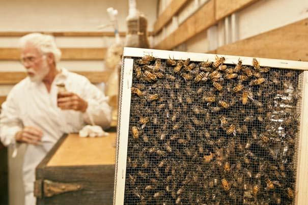 Μέλισσες σε ρόλο 3D εκτυπωτή (8)